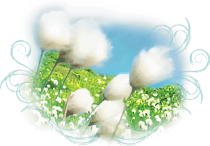image of cotton flowers